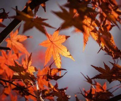 Dépression saisonnière - Automne